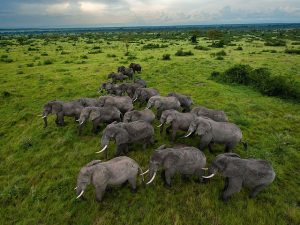 Elephants-300x225
