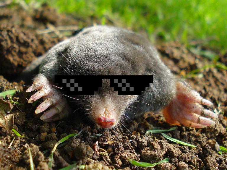 Cool mole v1